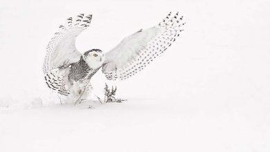 10 чёрно-белых фото с сильной композицией